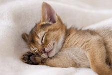 kitten 10