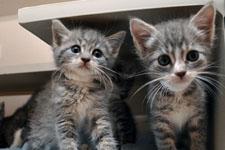 kitten 11