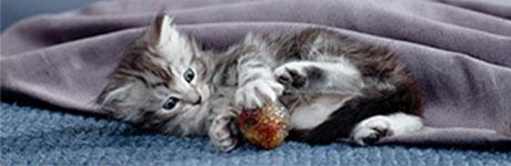 kitten 13