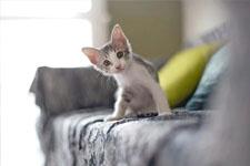 kitten 14