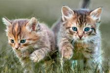 kitten 15