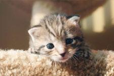 kitten 17