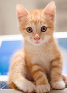 kitten 19