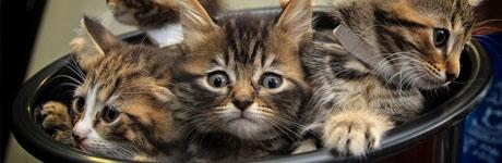 kitten 20