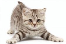 kitten 21