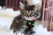 kitten 23