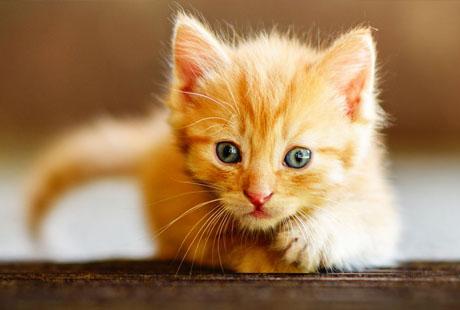 kitten 24