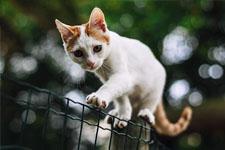 kitten 25