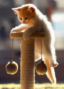 kitten 26